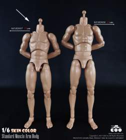 COOMODEL - Standard Muscle Arm Body with Skin Color (BD007)