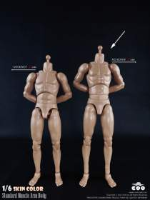 COOMODEL - Standard Muscle Arm 27cm HIGH Body (BD008)