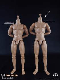 COOMODEL - Muscle Male 27cm HIGH Body (BD010)
