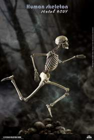 COO Model - The Human Skeleton (Diecast Alloy)